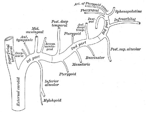 arteria carotida externa  neurocirug u00eda contempor u00e1nea
